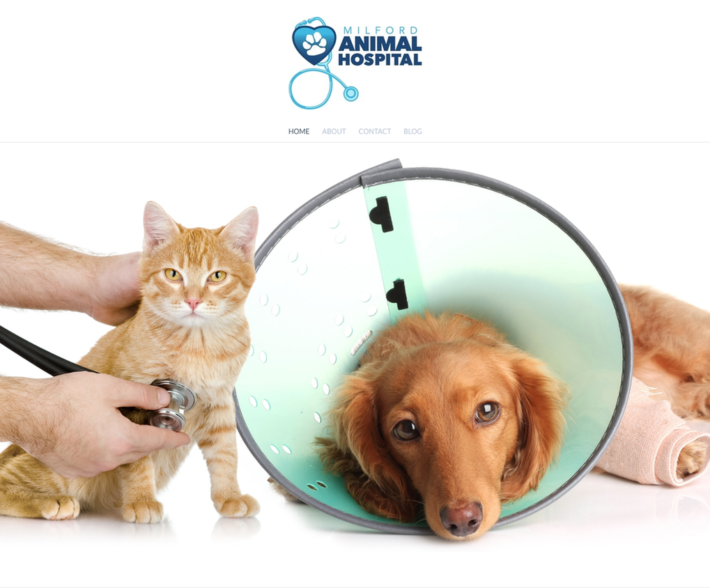 Milford Animal Hospital Website Design